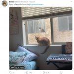 cats quarantine 33
