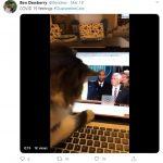 cats quarantine 35