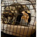 cats quarantine 6