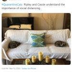 cats quarantine 8