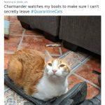 cats quarantine 9