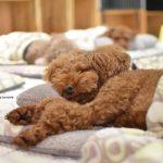 puppiessleep1