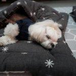 puppiessleep12