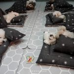 puppiessleep14