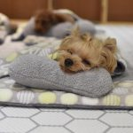 puppiessleep3