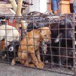 Humane-Society-Internationa