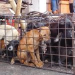 Humane Society International Australia