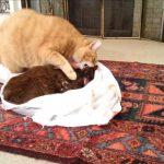 cat grieving