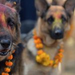 In Nepal, There's A Festival That Celebrates The Sacred Bond Between Dogs & Humans
