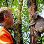 koala back in forest