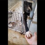 shelter dog wants to hold hands1
