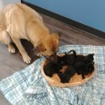 stray dog keeps kittens warm 1