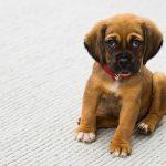 Best CBD Treats For Dogs 2021