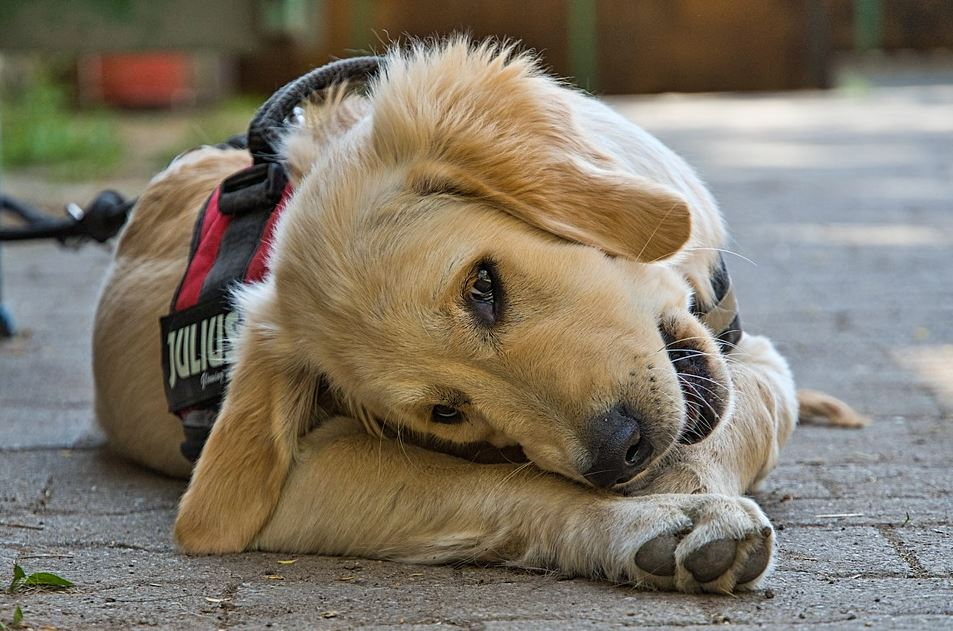 CBD Treats For Dogs 2021